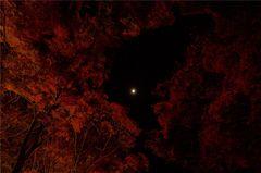 闇に浮かぶ#2