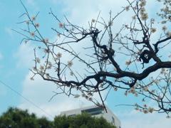 長閑なりや、春の空