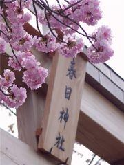 百年桜 #3