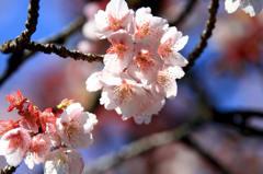 春を告げるもの 4