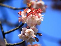 春を告げるもの 1