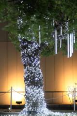 夜光樹(横浜産)