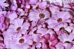 花屋さんの春