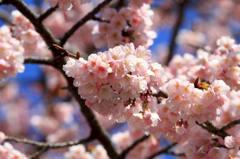 春を告げるもの 2