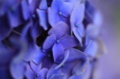ぼんやり紫