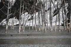 今日の月光池 キンクロの楽園と幻の滝