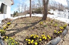 工房の庭にも春が来た♪
