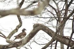 鴨も煽てりゃ木に登る 3