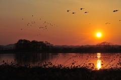 Landing of dusk