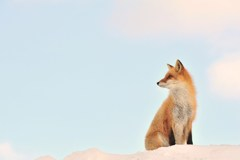 厳冬の野生