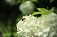 幌内の初夏