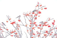 Small birds gathering around the red fru