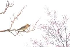 クライン・フォーゲル(Kleine Vögel)の休息