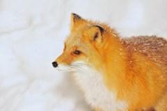 雪解けの季節はガーリーな装い