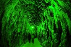 翠緑の回廊