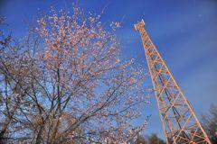 庭の夜桜 鉄塔添え 星空ソースがけ