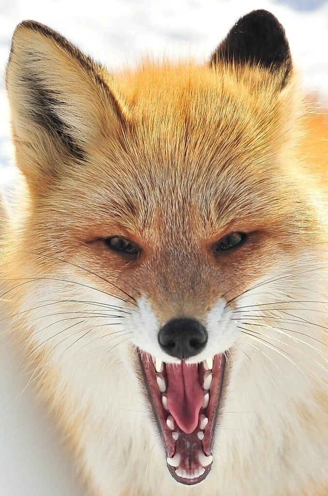 Wild anger