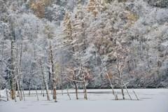 泉のほとりは冬が好き。雪があの人を連れてくるから