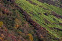 秋色パレット