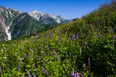 花穂と三山