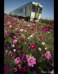 コスモス鉄道