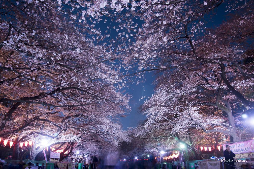 今夜の上野公園