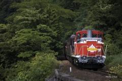 夏のトロッコ列車