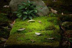 苔のベッド