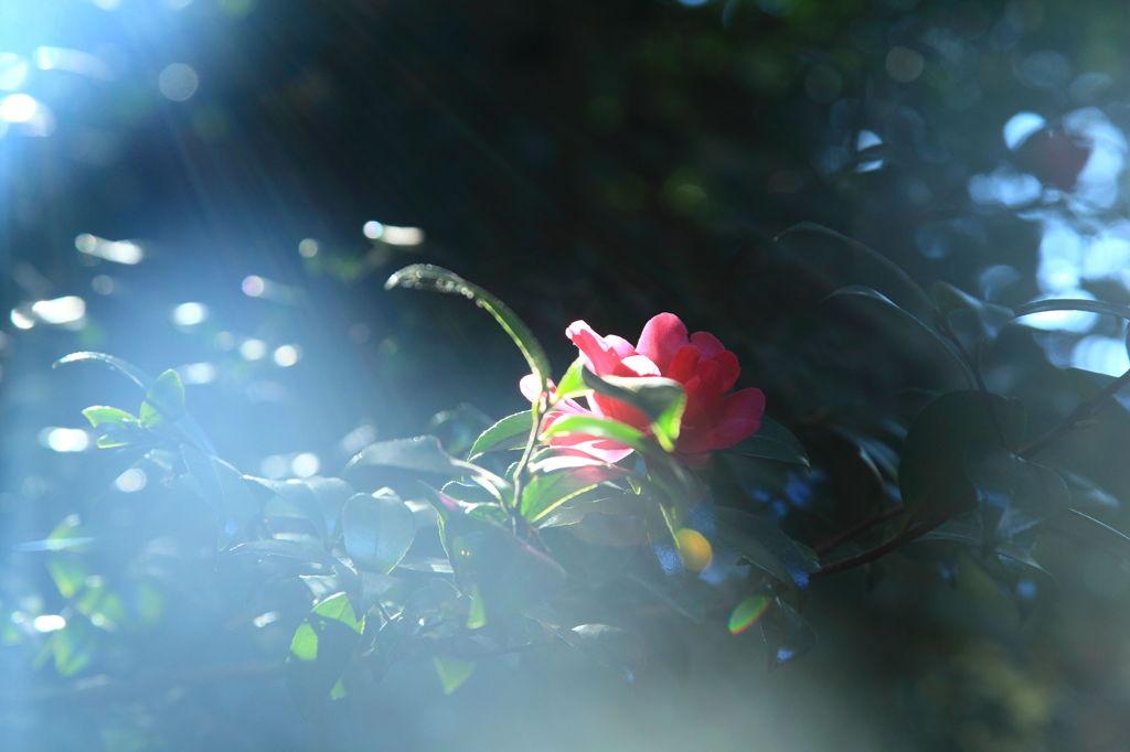 秋に咲く花、