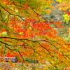 わたらせ秋景色