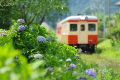 いすみ鉄道 梅雨景色