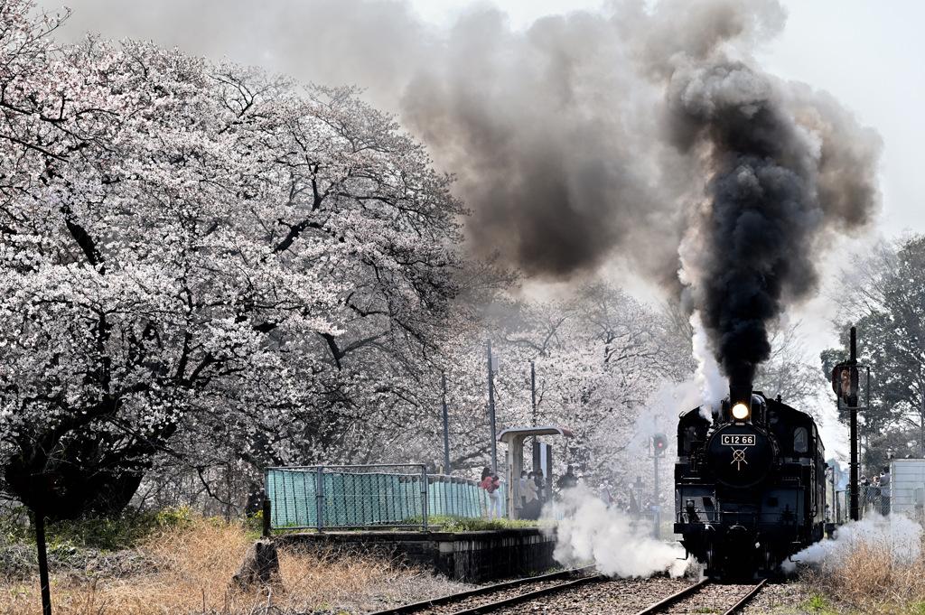 真岡鉄道 春景色
