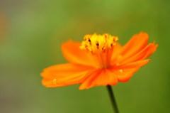 花びらに憩う