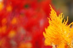 Autumn colour.