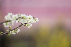 早春のトリコロール