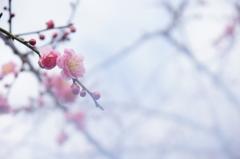 春はあけぼの・・・