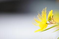 Yellow impression.