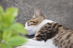 かわいい寝顔^^