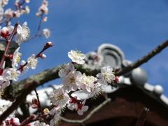 梅と甍・・・和風な風景