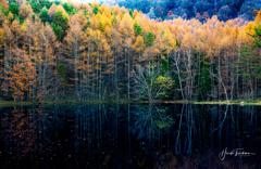秋の御射鹿池
