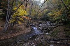 足早に流れる秋Ⅱ