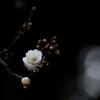 冬と春の狭間に一輪