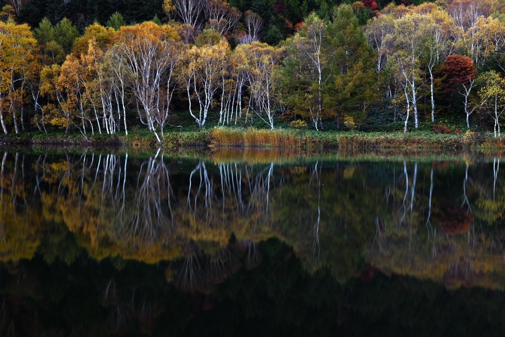 秋暁の木戸池