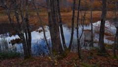 湿原の晩秋