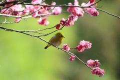 春 日 影