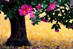 こかたしの 花や葉の上に 散り映えり