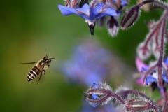 マドンナ・ブルーに飛蜂