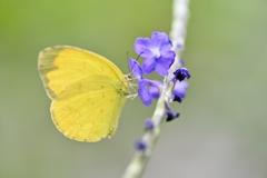 穂長草と黄蝶Ⅱ