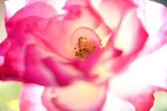 秋 麗 花