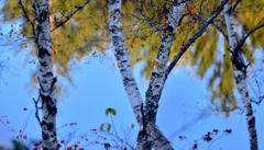 高原池の晩秋